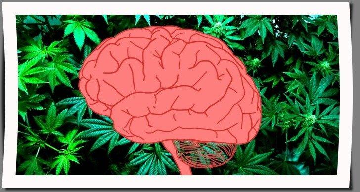 Рак мозга и каннабис