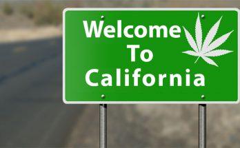 Марихуана в Калифорнии
